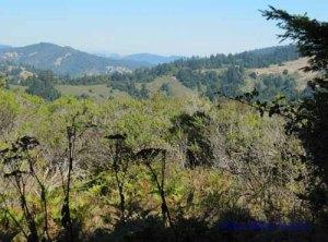 View above Pomo Canyon