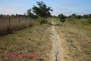 Barren Path along Roseland Creek