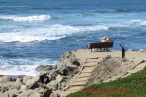Fitzgerald Marine Reserve Bench