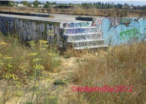 Roseland Creek Graffiti