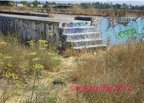 Roseland Creek Graffiti