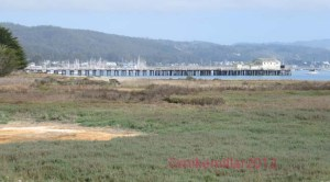 Pillar Point Marsh