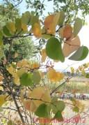 Roseland Creek Leaves
