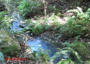 San Pedro Creek
