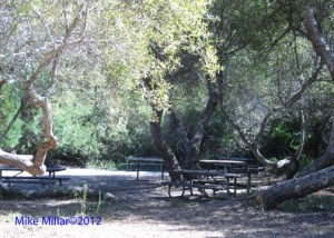 San Pedro Valley Picnic
