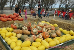 Fall Squash Tolay Lake