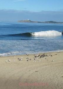 Half Moon Bay Surfer