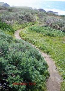 Bodega Head Trail