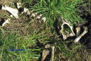 Kortum Trail Skeleton