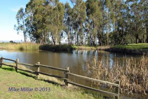 Pt Pinole pond