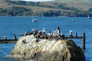 Tomales Bay Rock