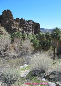 Andreas Canyon overlook
