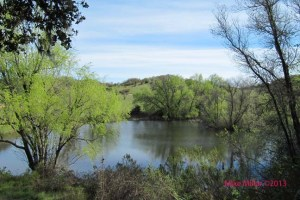 Healdsburg Ridge Fox Pond
