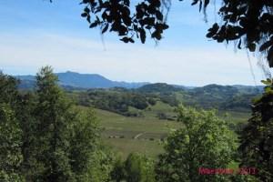 Healdsburg Ridge overlook