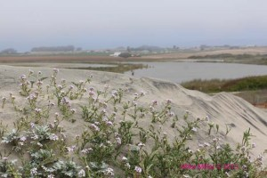 Zmudowski view from a dune