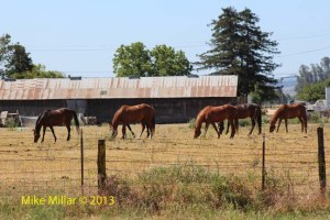 Colgan Creek Horses