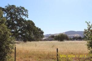 Meadow at Colgan Creek