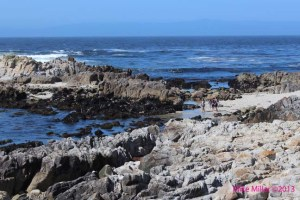 Pacific Grove Coast