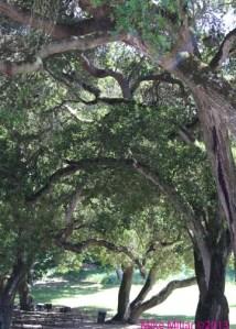 Royal Oak Regional Park