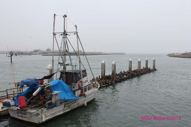Sea Lion dock