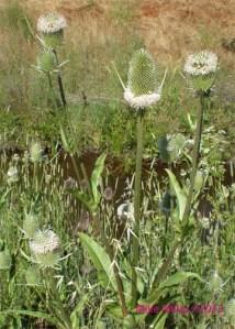 Happy Weeds