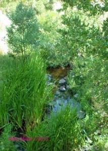 Forestview Creek