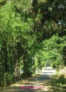 Forestview Creek Path