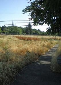 Greenway path near Franquette