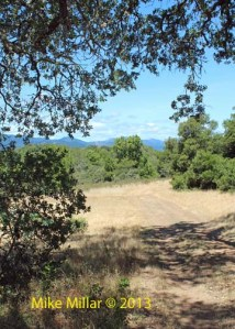 Healdsburg Ridge Meadow