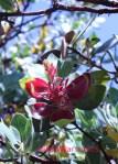 Healdsburg Ridge New Leaf Manzantia