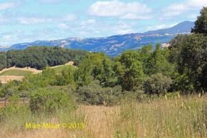 Healdsburg Ridge Vista