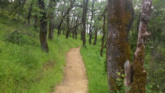 Healdsburg Ridge trail