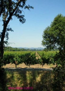 Vineyard View from Creek walk