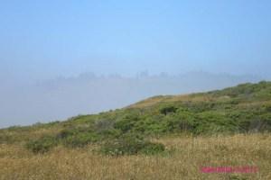 North Coast Mist