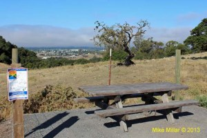 Taylor Mountain Picnic Table