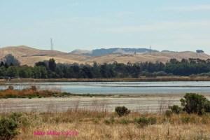Wetlands near Alman Marsh