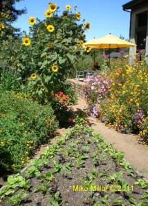 Lynmar Veggie Garden