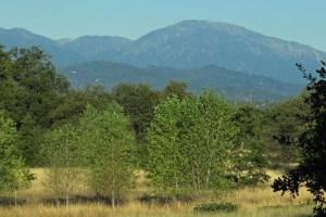 McConnell Arboretum view Redding