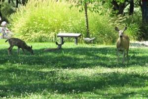 McConnell Gardeners Redding