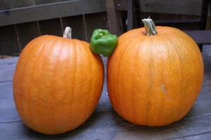 Pumpkins and pepper