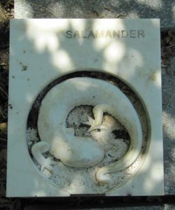 Stone salamander Redding