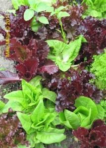 Winery Gardens KJ Vegetables