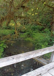Hoh Rain Forest Creek