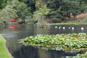 Mingus Park pond Coos Bay