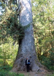 Sitka Spruce and moi