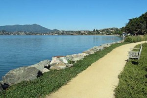 Tiburon Flat trail near road
