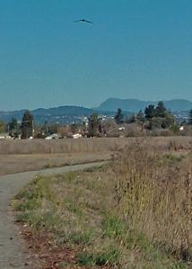 Colgan Creek Meadow