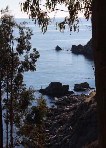 Ft Ross Cove