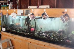 Pt Cabrillo Aquarium
