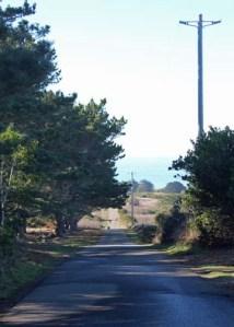 Road to Pt Cabrillo